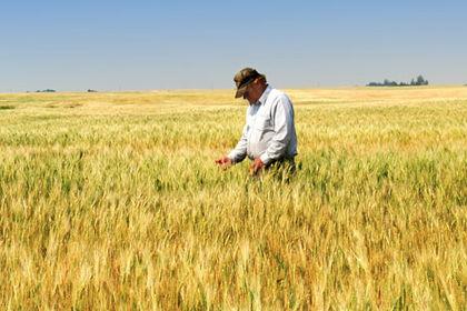 Analiz: Gıda fiyatları artıyor ama çiftçi kazanamıyor - II