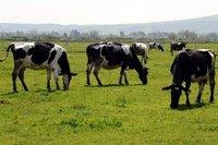 Analiz: Türkiye'nin 2018'e dek kırmızı et açığını kapatması olanaksız