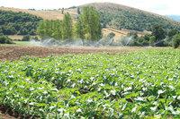 Tarıma dayalı yatırım desteklemelerinde değişiklik