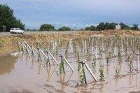 Analiz: Tarım sigortalarında hedef %16
