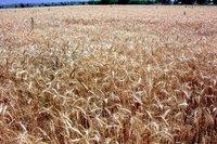 AB'den Türk tarımına 1 milyar euro