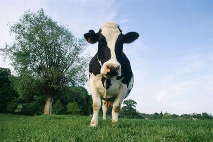 Süt sektörü kota tehdidine hazırlıklı mı?