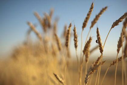 Gıda fiyatları dünyada düşerken Türkiye'de enflasyonun öncüsü oluyor