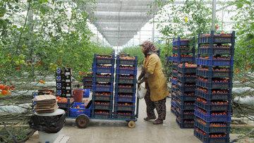 Türk sebze-meyvesi 2 haftada Rusya'da