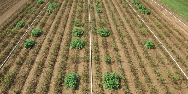 Tarımsal danışmanlıkta destek ödemeleri