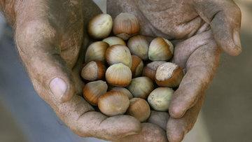 UFK/Başaran: Fındık üreticisi mağdur