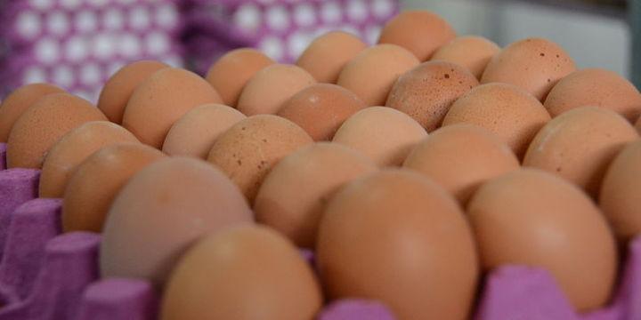 Yumurta üretimi % 6.3 düştü