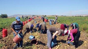 BDDK/Asarkaya: Tarımın istihdamdaki payı yüzde 18'in üzer...