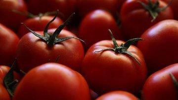 'Domates ihracatımız yüzde 40 arttı'