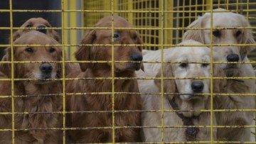 Pet shop'ta kedi ve köpek satışına yasak geliyor