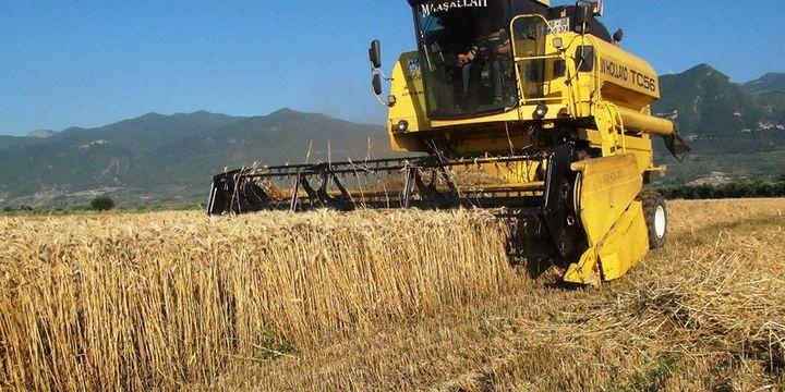 Tkaçev: Türkiye, Rus buğday ithalatına yönelik kısıtlamaları kaldırdı