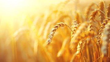 Bazı tarım ve hayvancılık ürünlerinde gümrük vergileri dü...