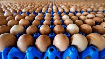 Avrupa'da böcek ilaçlı yumurta skandalı büyüyor