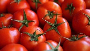 Antalya'dan 46 ülkeye domates ihracatı