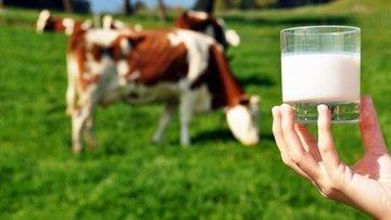 Üretici yeni süt fiyatından memnun