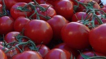 Rusya 1 Aralık itibariyle Türkiye'den domates ithalatına ...
