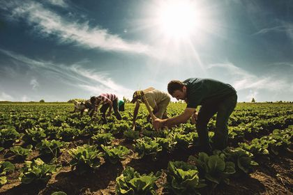 Bankaların tarım kredisi %21,7 arttı