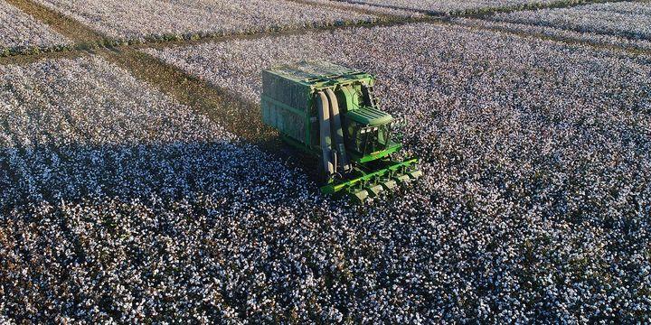 Küresel pamuk üretimi yüzde 10 artacak