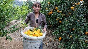 """""""Çiftçi rekabet edemiyor, turunçgilde maliyetler düşürülm..."""
