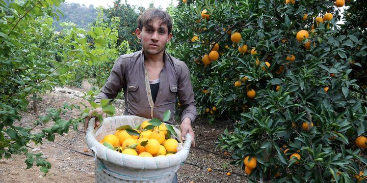 """""""Çiftçi rekabet edemiyor, turunçgilde maliyetler düşürülmeli"""""""