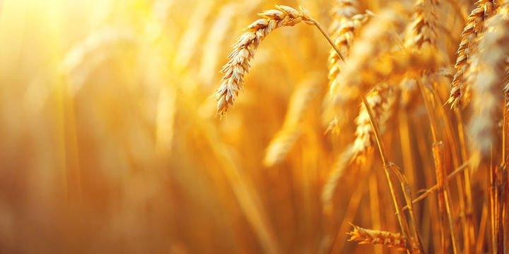 Tarım ÜFE Ekim