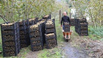 Üreticiler kividen 14,5 milyon lira kazandı