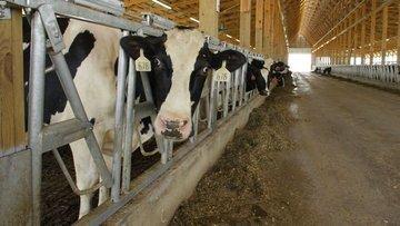 TİGEM süt ihalesine çıktı