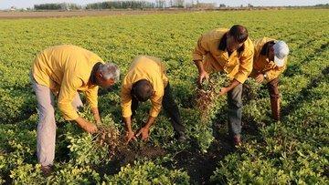 Cezaevinde organik tarım