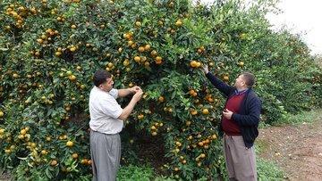 Mersin ve Alanya'da tarım arazilerini dolu vurdu