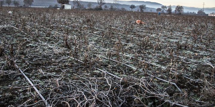 Zirai don tarım arazilerinde etkili oldu