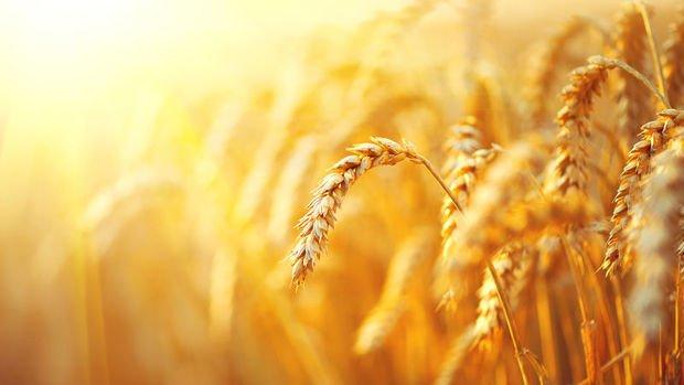 Tarım ÜFE kasımda arttı