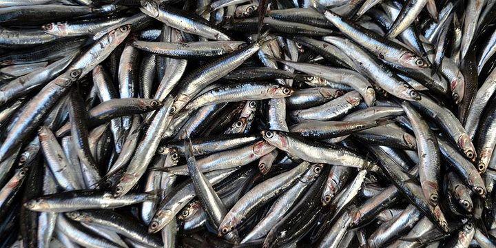 Bir yılda yaklaşık 173 ton balığa el konuldu