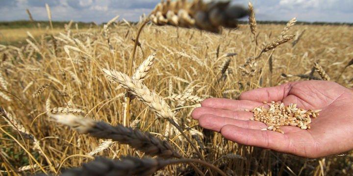 TÜİK, 2017 yılı bitkisel üretim verilerini açıkladı