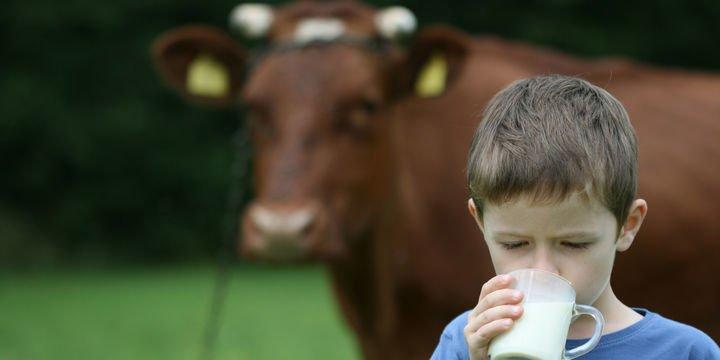 Süt üretimi Kasım