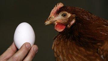 Yumurta ve tavuk eti üretimi Kasım'da azaldı