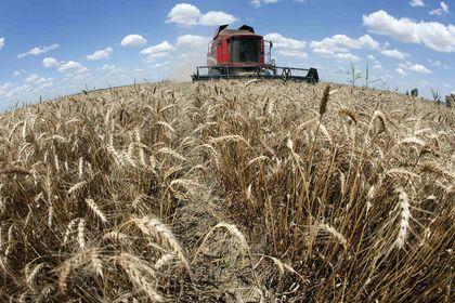 FAO'nun Ocak ayı Gıda Fiyat Endeksi açıklandı