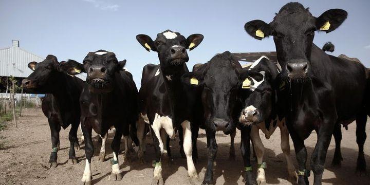 Hayvancılıkta 2017 üretim karnesi açıklandı