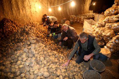 600 bin ton patates depoda kaldı