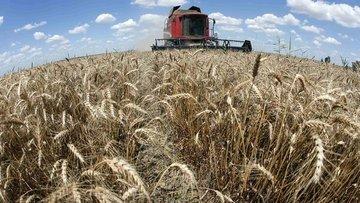 FAO Küresel Gıda Fiyat Endeksi Şubat'ta arttı
