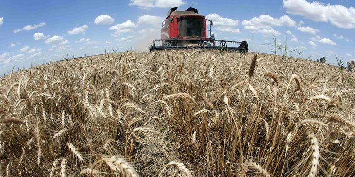 FAO Küresel Gıda Fiyat Endeksi Şubat