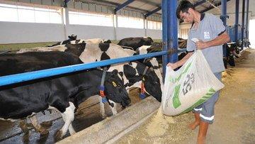 Çiftçi yem fiyatlarındaki zamlardan şikayetçi