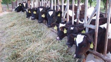 """""""Yem fiyatlarındaki artış nedeniyle üreticiler hayvanları..."""