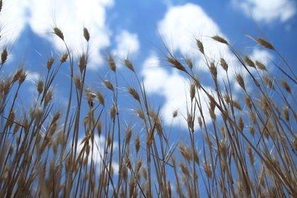 Tarımda 5,5 milyon kişi 120 milyon ton ürün üre...