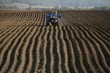 FAO Gıda Fiyat Endeksi Nisan'da sınırlı yükseldi