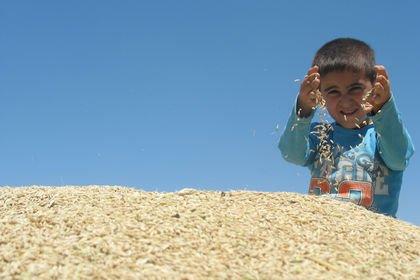 FAO: İklim değişikliği gıda kaynaklı hastalıkla...