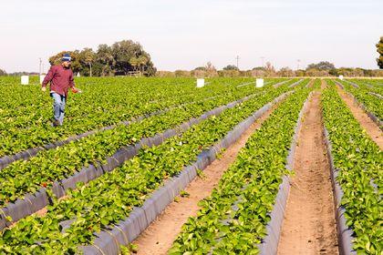 Tarım-ÜFE Nisan'da azaldı