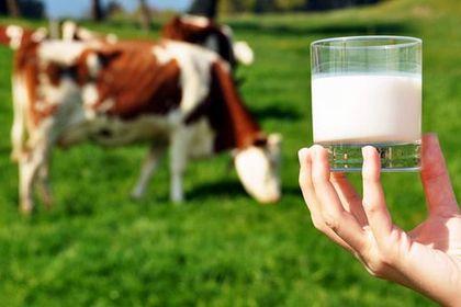 Toplanan inek sütü miktarı Mart'ta arttı