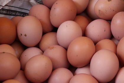 Tavuk yumurtası üretimi Mart'ta 1,7 milyar adet...