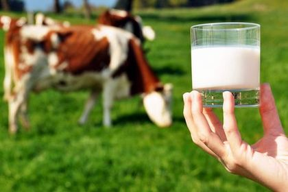 Toplanan inek sütü miktarı nisanda arttı