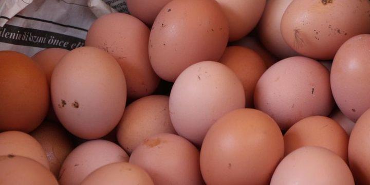 Tavuk yumurtası üretimi Nisan